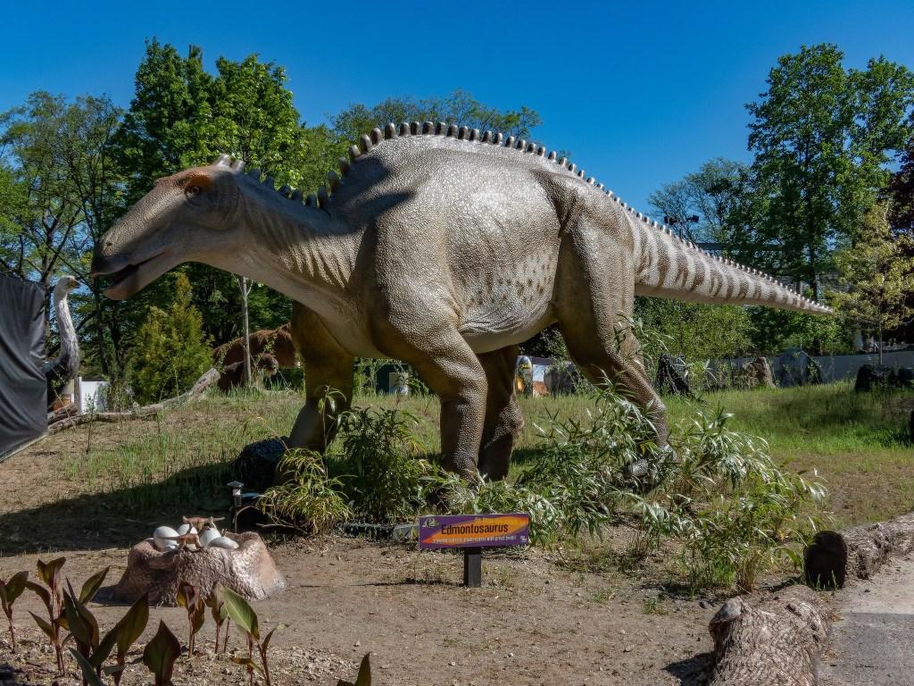 Edmontosaurus is 40 feet long