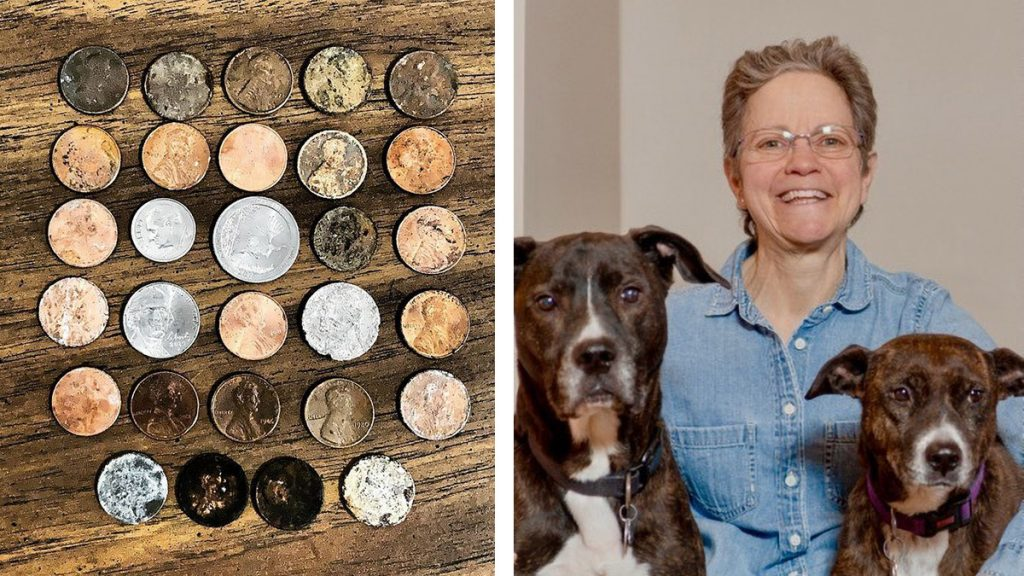Lisa Phillips with her rescue dogs Charlie and Daisy. While on walks she searches out money on the street and collects it for charity.